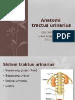Anatomi Urologi