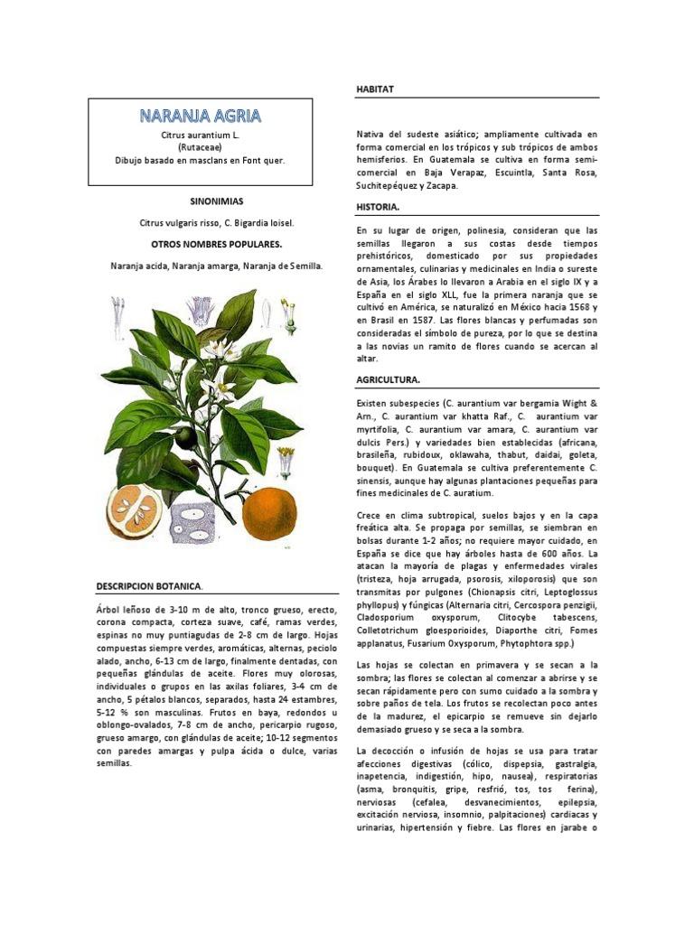 NARANJA AGRIA.pdf