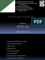 Sistema de Circulacion