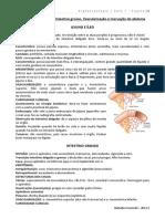 7. Jejuno, Íleo, Intestino Grosso, Vascularização e Inervação Do Abdome