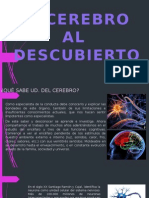 ENCEFALO-sensacion-percepcion-y-memoria (2).pptx