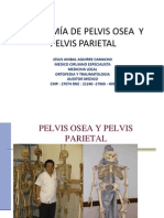 Anatomia de La Pelvis Dr Jaac PDF