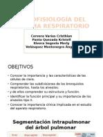 seminario 10 histologia