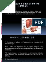 Metabolismo de Lipidos I fase de absorcion