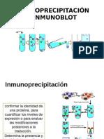 inmunoprecipitación-inmunotransferencia