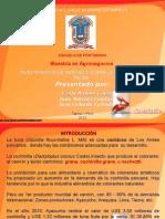 exposicionestudiodemercadocochinilla-120705195132-phpapp02.ppt