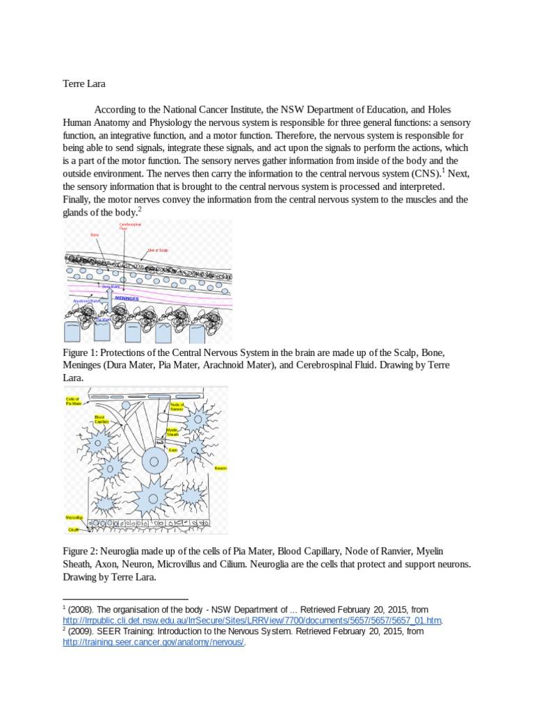 nervous system lab report - google docs | Nervous System | Central ...