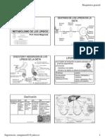Metabolismo de Los Lipidos OML