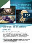 Poríferos, Moluscos e Cnidários