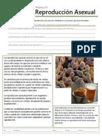 B-19 Reproducción Asexual.pdf