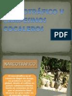 Narcotráfico y Campesinos Cocaleros