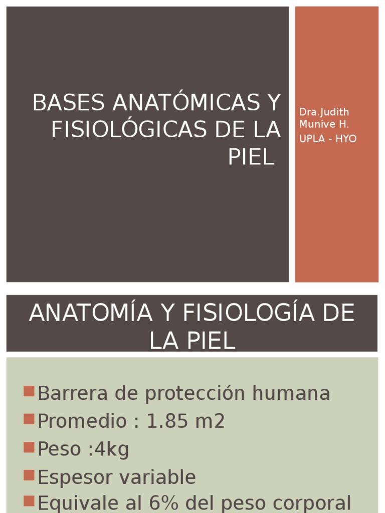 Anatomia y Fisiológica de La Piel