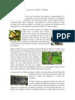 Las Aves en El Estero (1)