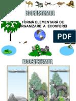 Clasificarea ecosistemelor.ppt