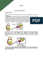 Mechanism of BPPV