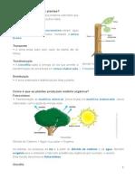 resumo ciencias_plantas