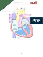 Monografía Insuficiencia Cardiaca Congestiva