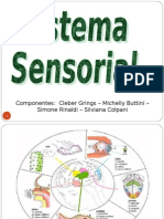 sistema+sensorial.ppt