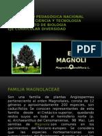 El Magnolio