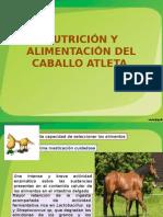 Nutrición y Alimentación Del Caballo Atleta