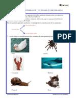 Animales Vertebrados y Animales Invertebrados