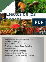 Efectos de los hongos.pptx