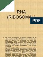 Rna Ribosomal