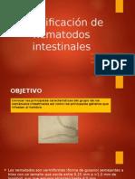 Identificación de Nematodos Intestinales