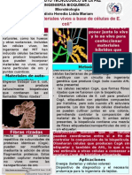 Poster Microbiologia