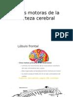 Areas Motoras de La Corteza Cerebral Ppt Hector Caballero (1)