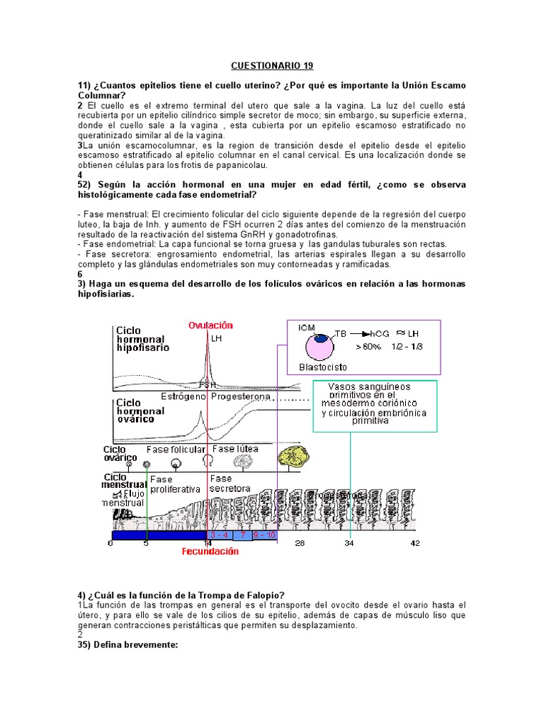 Fase endometrial del ciclo menstrual