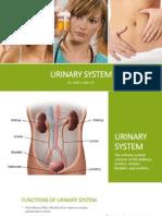 urine system