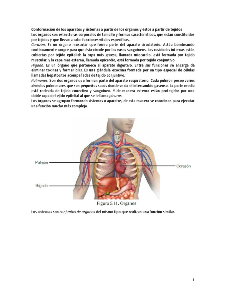 Conformación de Los Aparatos y Sistemas a Partir de Los Órganos y ...