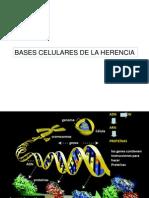 03 Bases Celulares de La Herencia