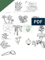 Plantas Para Colorear 1