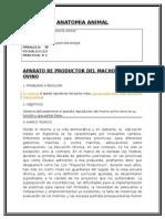 Anatomia Animal Del Aparato Reproductor Del Ovino