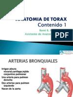 Anatomia de Torax Contenido 2
