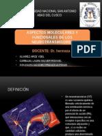 aspectos moleculares y fisiopatologicos de los neurotrasmisores