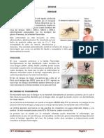 Dengue - 7 Hjs