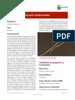 Ascaris Lumbricoides (1)
