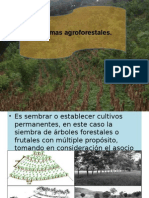 Presentacion sistemas agroforestales
