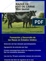 Razas Carne Bos Taurus