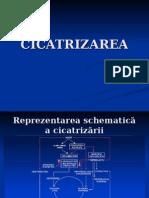 CICATRIZAREA-1