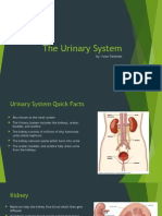 the urinary system powerpoint