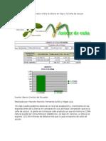 Cuadro Comparativo Entre La Stevia en Hoja y La Caña de Azucar