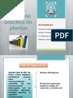 Nic 41 - Aplicacion Plantas