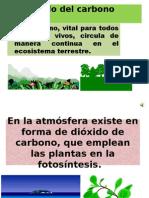 Presentacion Del Ciclo Del Carbono