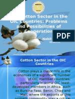 Cotton_Paper.ppt