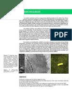 determinacion de proteinas en el higado de un raton
