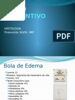 HL4 - TEJIDO CONECTIVO